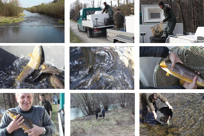 Fishery Vistula