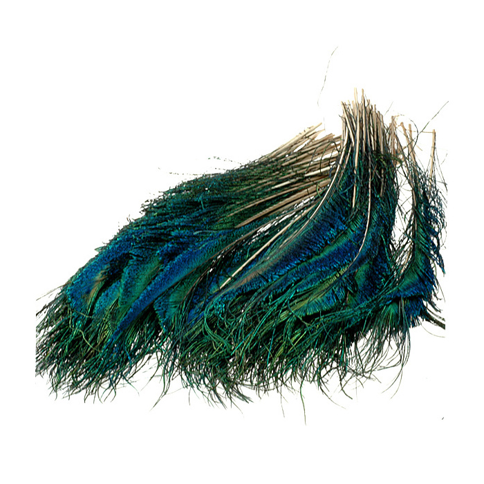 Peacock sword tails