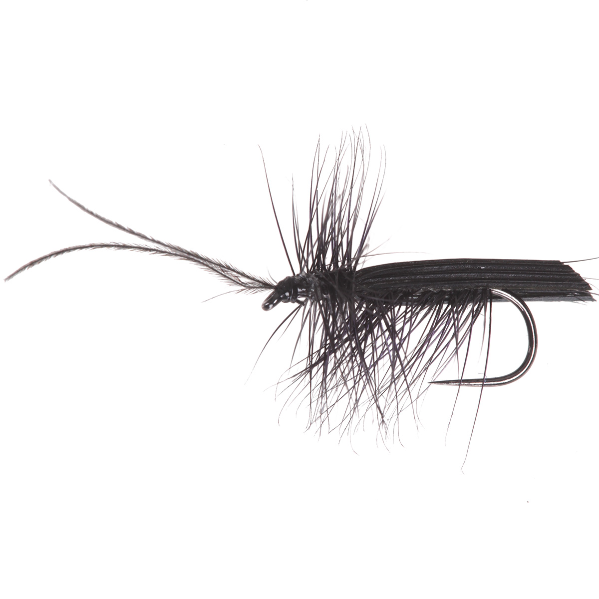 Black Sedge Horned