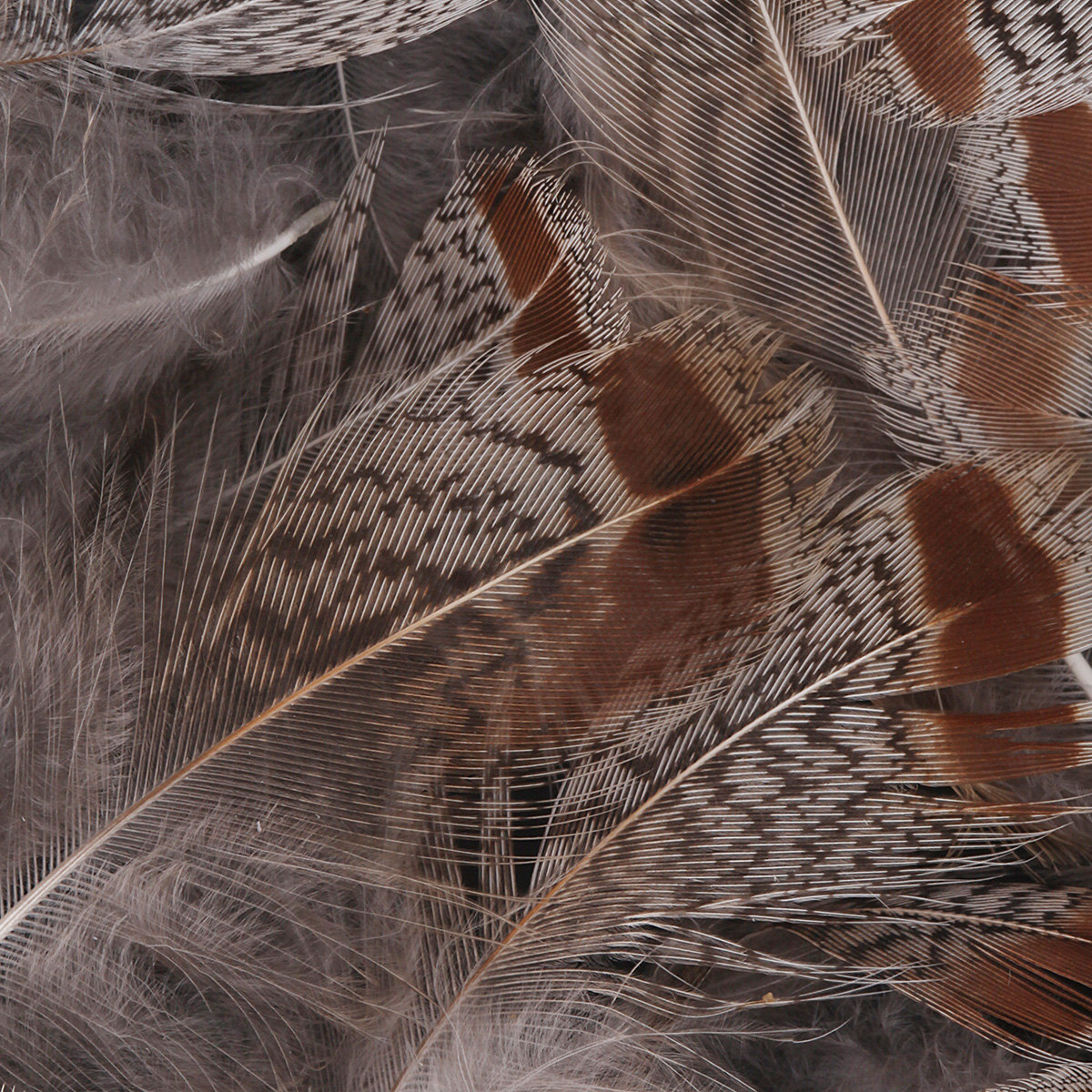 Hungarian Partridge Feathers 1 gram