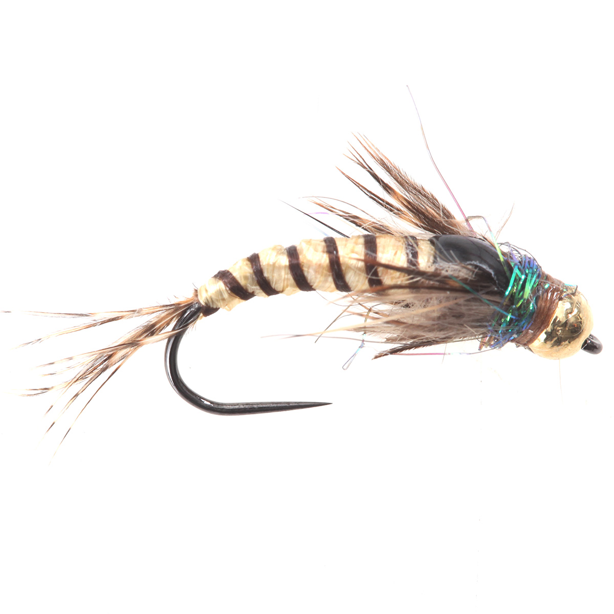 Cream Ribbed Brown Nymph