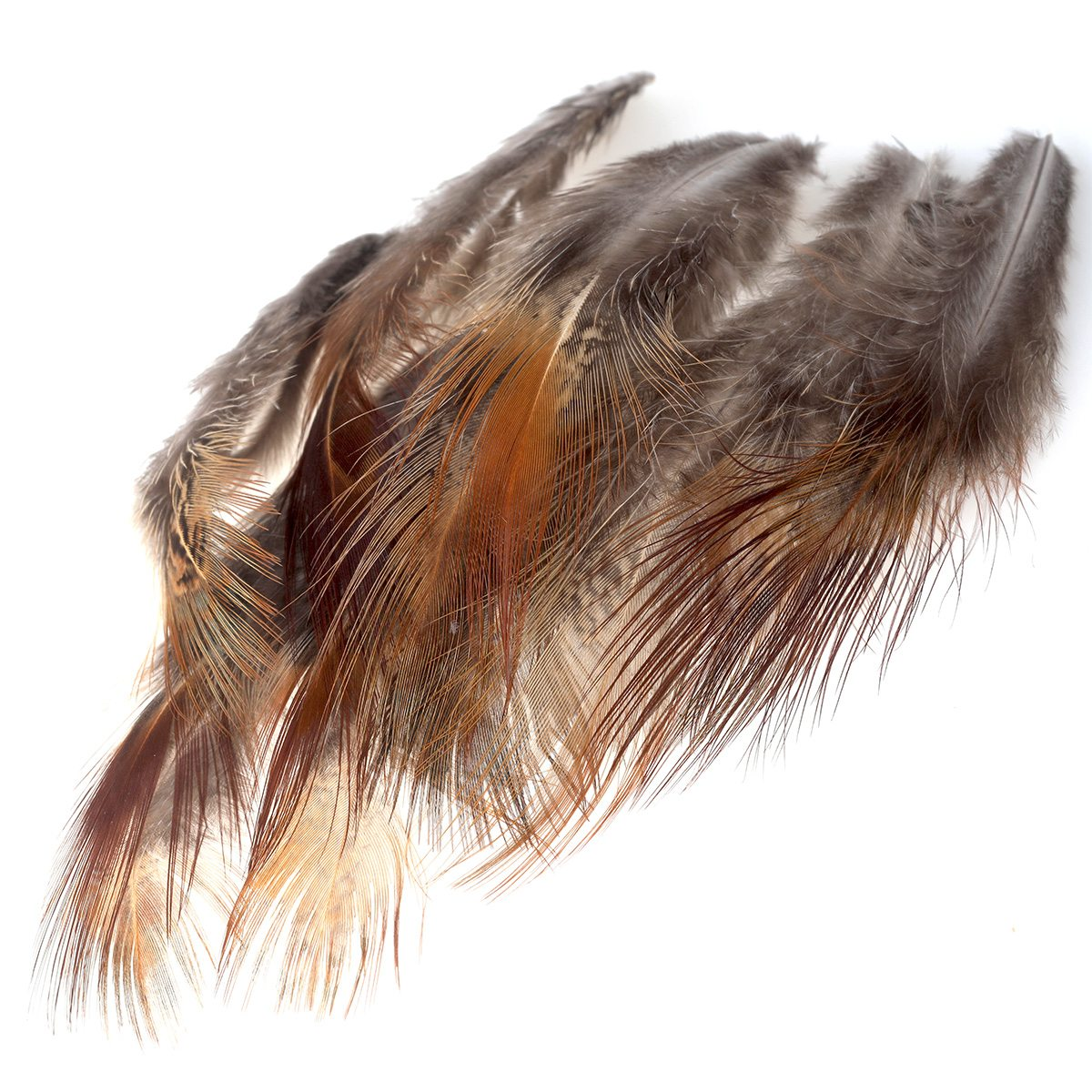 Pheasant Long Brown Rump Feathers