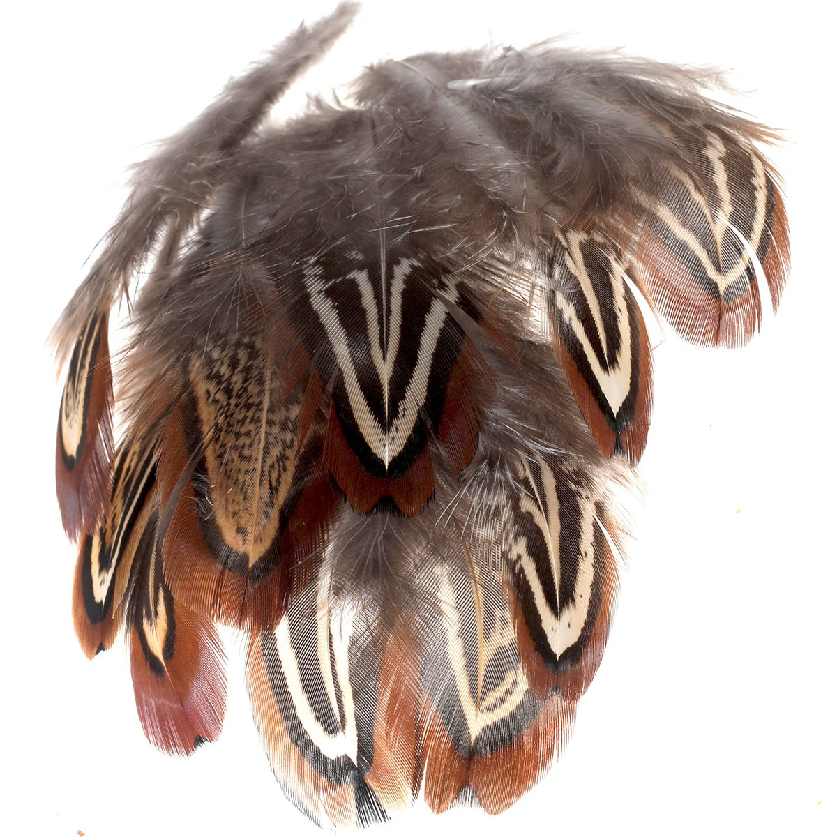 Pheasant Shoulder Feathers (Church Windows)